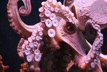 Octopus / i love them i want one!!