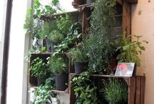piante piantine e esperte di sopravvivenza in genere / piante