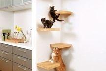 Cat props