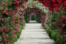 flowers n gardens