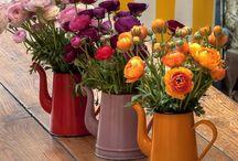 Huelen bien / Las flores huelen bien, es un hecho, pero hasta su color huele bien.