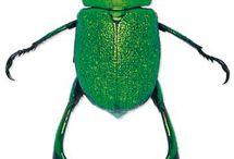 scarabaeidae mix
