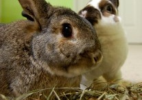 Bunny Rabbits / #Rabbits are so special.  We love them here and have a couple of #houserabbits that are a very big part of our family.  Enjoy these #rabbitimages and links to sites to help you learn more how live naturally with these dear, sweet pets. / by Ginney Harris