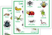 Mai - Pays du monde - Fête des mères - insectes