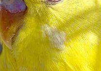Birds  / by Christine Hice