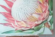 Paintings of Protea's