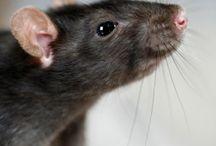 #Mice Control Services Apopka