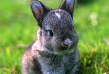 Why are bunnies sooo cute?!