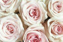 foto розы