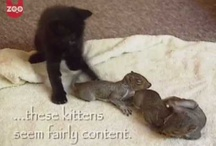 Cats and Squirrels / by Funny Cats