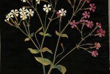 flores / Flores (e cores).