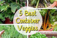 Container Veggies