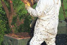 Μελισσοκόμια