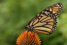 Exotic Butterflies / Exotic Butterflies Photos Nature Fauna
