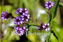 Flower and Plant Photography / Photos by PNE