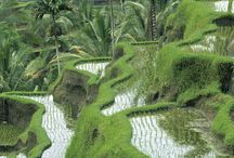 the beauty of Bali Indonesia