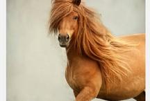 LOVE OF HORSES