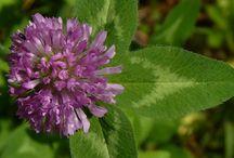Wondrous weeds