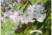 Spring / Spring Landscape