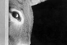 donkeys / ...