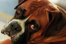 Boxers are the Best... / by B.J. Laird