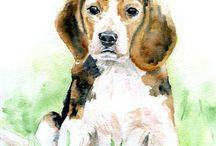 Beagle ❤