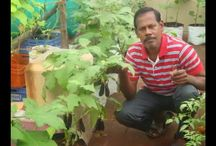 Terrace Gardens in Chennai