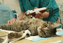 Veterinary Anesthesia / Despite common misconceptions, anesthesia is an essential tool for safe and thoroughly conducted procedures. Here, take time to learn more about anesthesia use and the realistic benefits it presents to patients.
