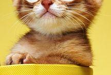 oranssit kissat