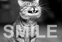 Make my day (Humor)