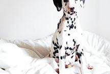 I. heart. spots. / Dalmatians, Puppy Love