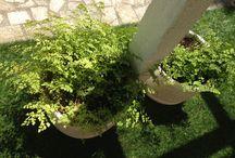 Flores, jardins, / Fotos reais de lugares que visito