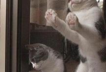 Cats! ❤❤