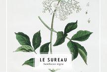 Inspiration Box: Plants Pics