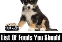 Things That Pet Owners Should Know