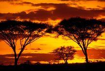 My African Dream / My 20 year adventure in Africa