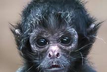 The Wonderful World of Primates / Astonishing photographs