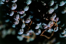 Grapes and beyond