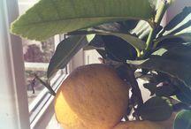 Medelhavsväxter