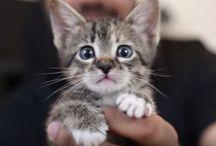 Animals! Sooo Cute!