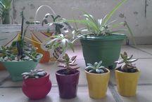 Said SARA plantas e cactos / Said Plantas e cactos