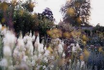 Lente / planten, bloemen, vogels, meer licht