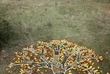 bush craft for kids