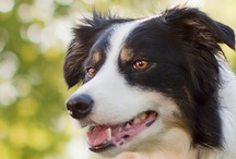 The All Natural Dog / Resources For The All Natural Dog