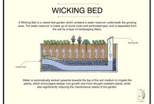 Raised and Wicking vegie beds