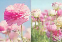 flower ♥ / by Sharon K