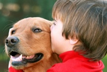 Life With Pets / How to maximize the fun and love that comes with living with pets, while minimizing the hassles!