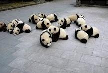 Pandas / by Laurel Lindsay
