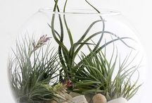 мини-сад: флорариум