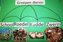 thema dieren